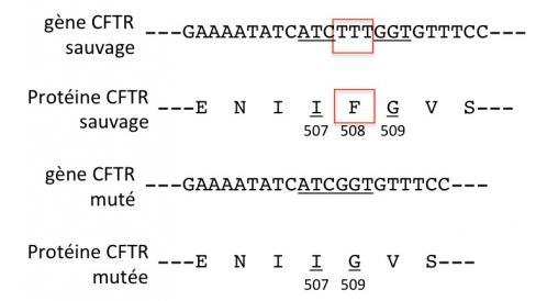 Mutation f508del