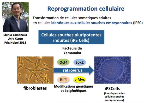Reprogrammation cellulaire