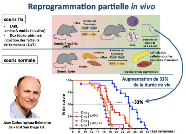Reprogrammation partielle in vivo