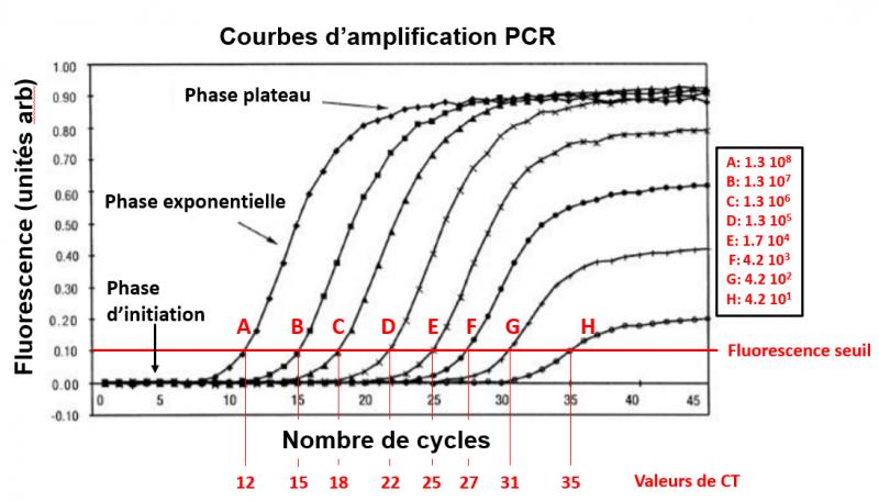 Courbe de fluorescence pcr freeman et al biotech 1999