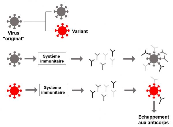 Variant et immunoresistance